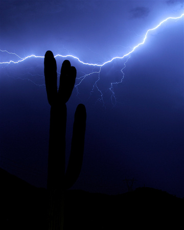 Saguaro in the Storm